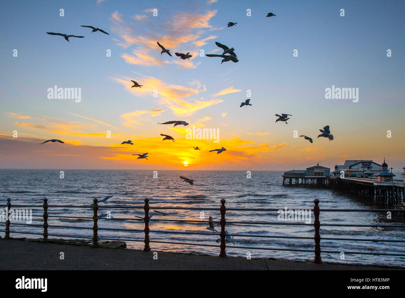 Blackpool, Lancashire, UK.   UK Weather.  8th March, 2017. Golden sunset with seagulls on the seafront. Traditionally - Stock Image