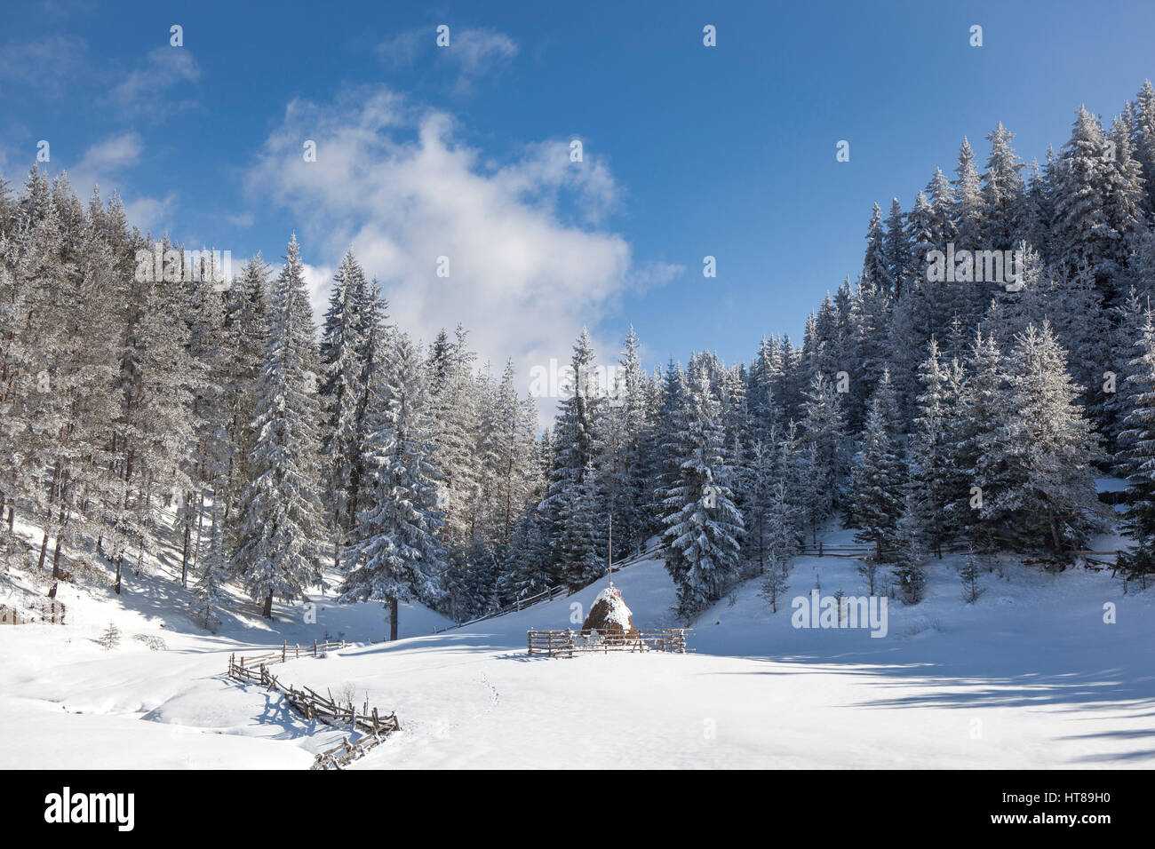 Winter landscape with snowy pine trees and a haystack covered with snow in a small glade. Stock Photo