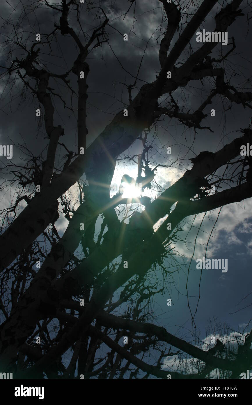 Sun beaming through a winter tree in Los Angeles - Stock Image