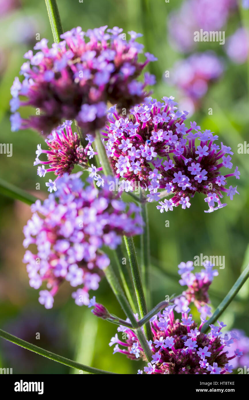 Free Images : nature, field, meadow, flower, petal, green, botany ... | 1390x866