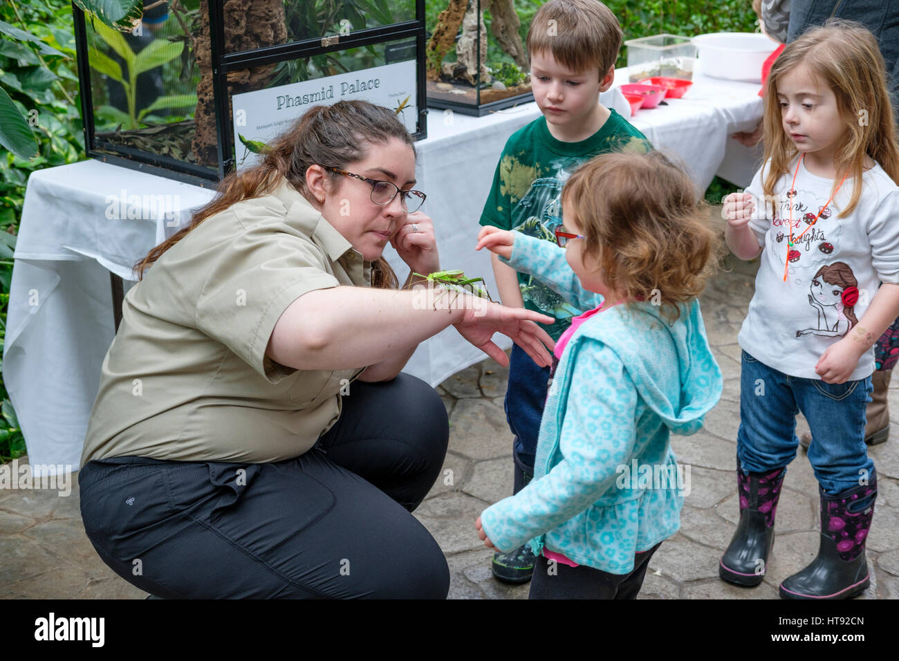 Preschool children touching a Malaysian jungle nymph (Heteropteryx dilatata) held by a nature interpreter at the - Stock Image