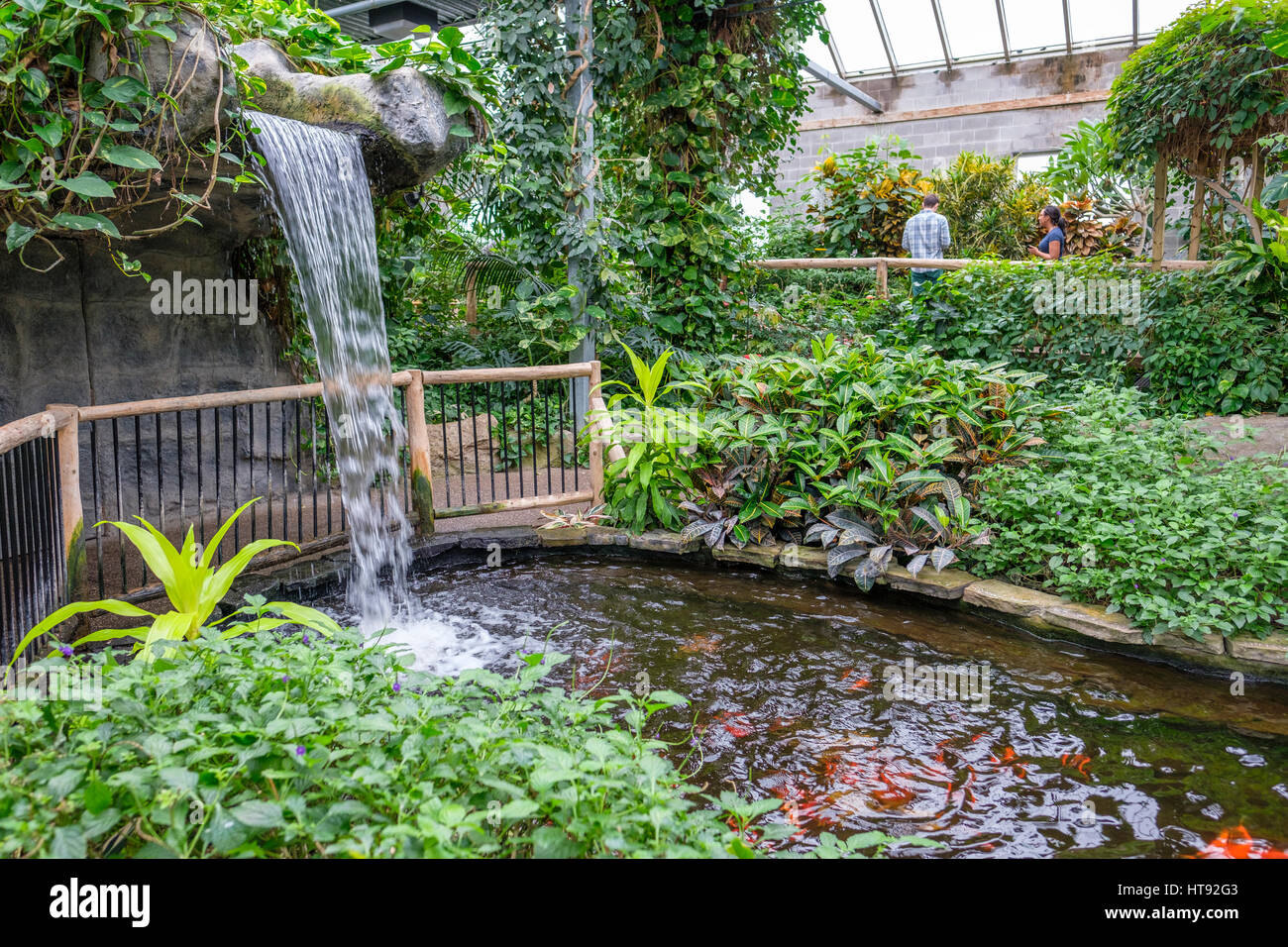 Inside view of the greenhouse and tropical garden of the cambridge inside view of the greenhouse and tropical garden of the cambridge butterfly conservatory with waterfall and fish pond in ontario canada workwithnaturefo