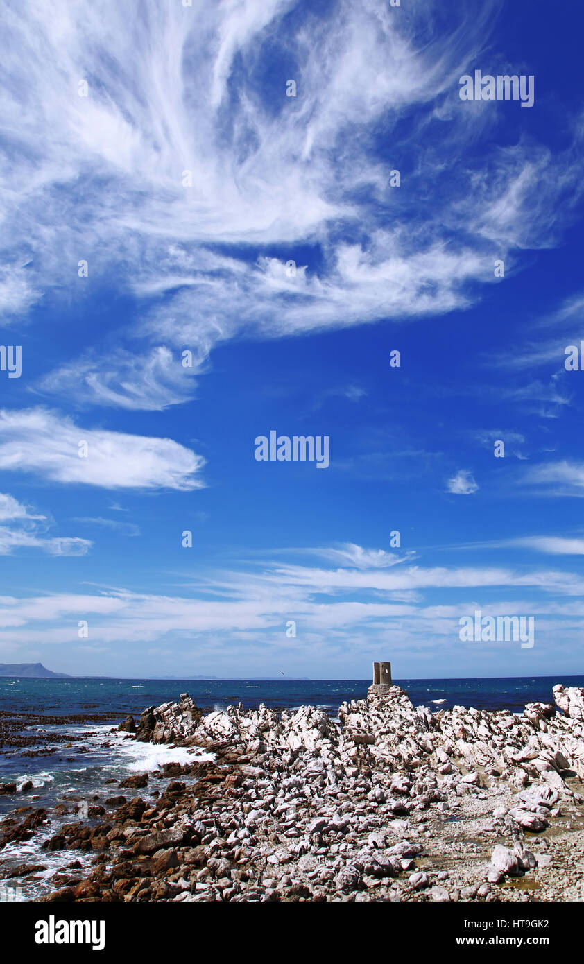 colony of Cape cormorants, South Africa - Stock Image
