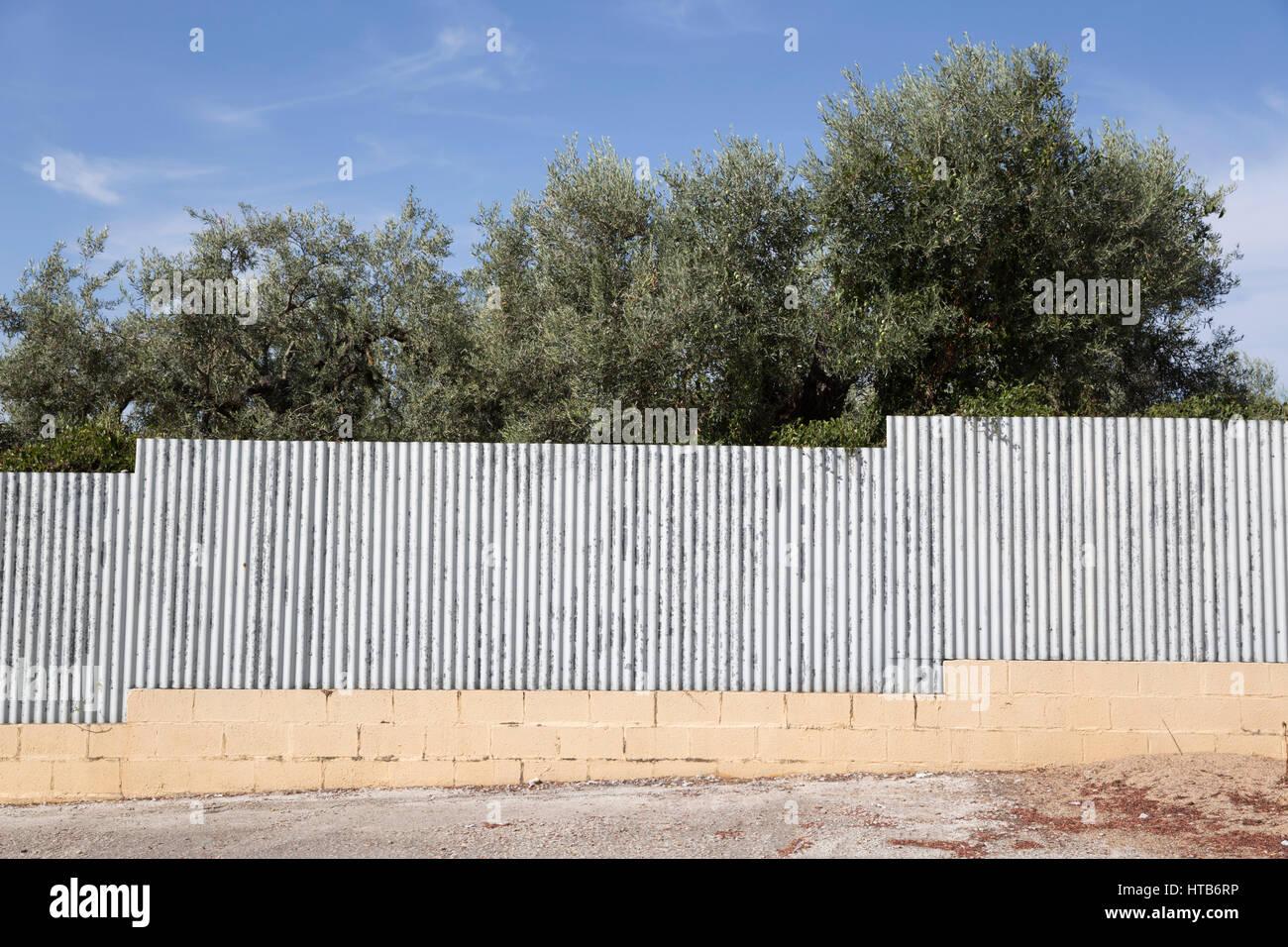 corrugated iron fence and olive trees - Stock Image