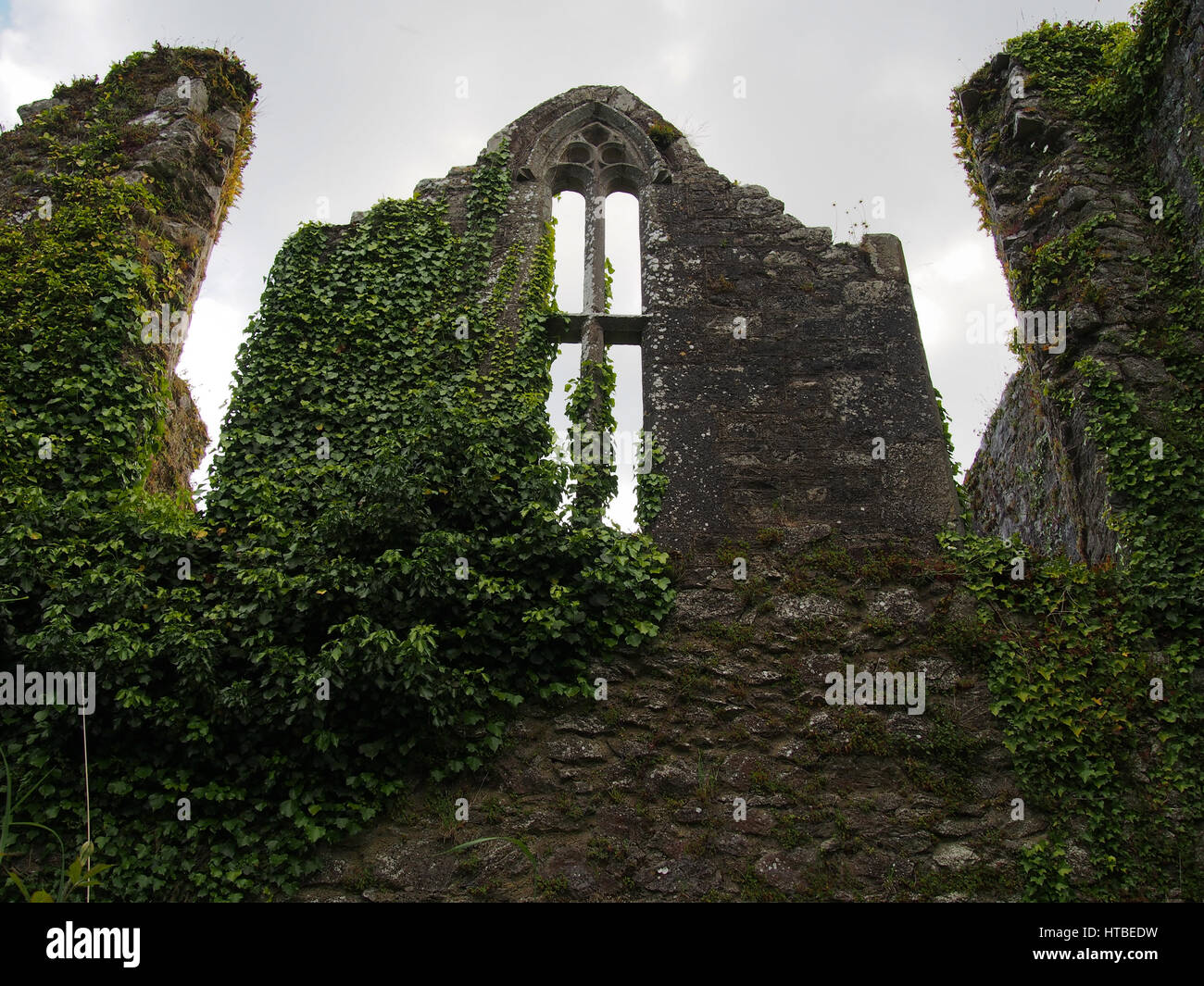 A window in ruins overgrown with ivy at Bridgetown Priory outside of Castletownroche in Cork County Ireland. - Stock Image
