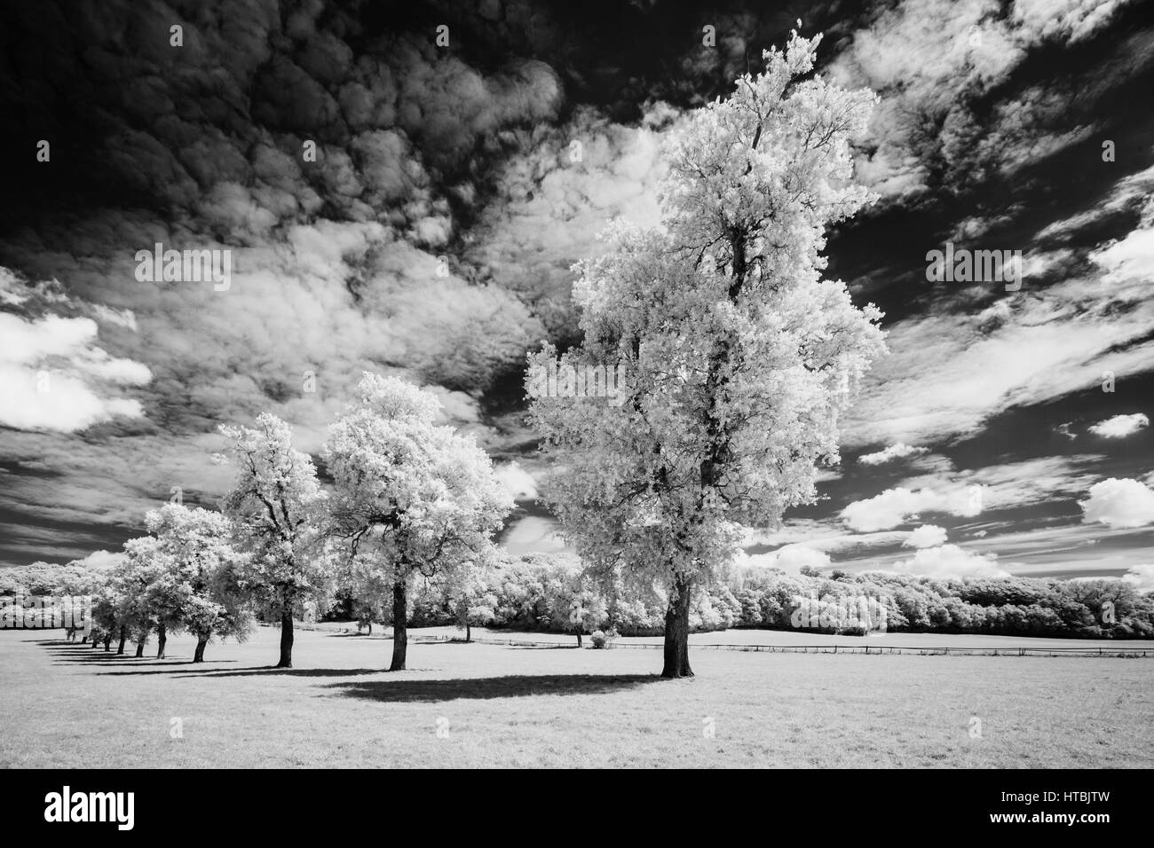Trees along the Gallop, Milborne Port, Somerset, England, UK - Stock Image