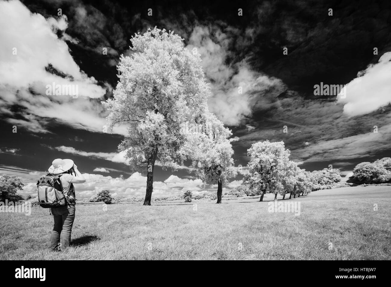 f11 Photographing the Gallop, Milborne Port, Somerset, England, UK - Stock Image