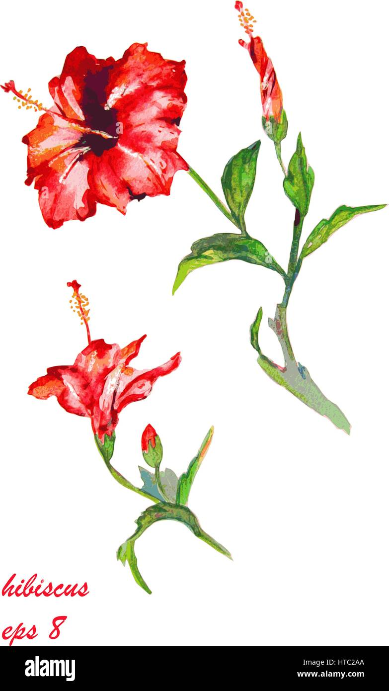 Tropical hibiscus flowers. Handmade watercolor vector. Isolated on black background.  Original art. - Stock Vector