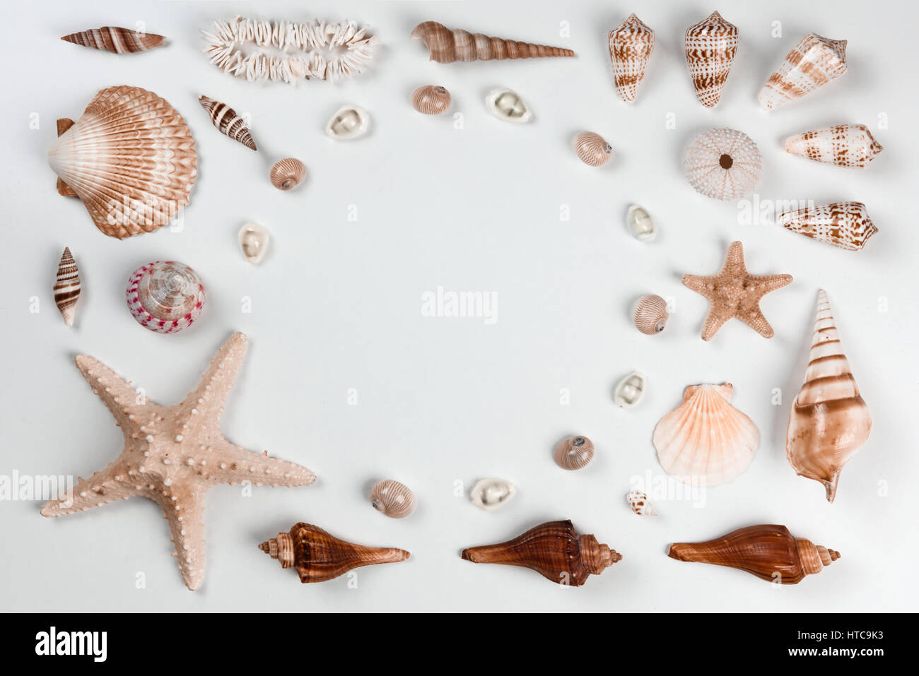 Collection of cockleshells on white background. Flat lay concept Stock Photo