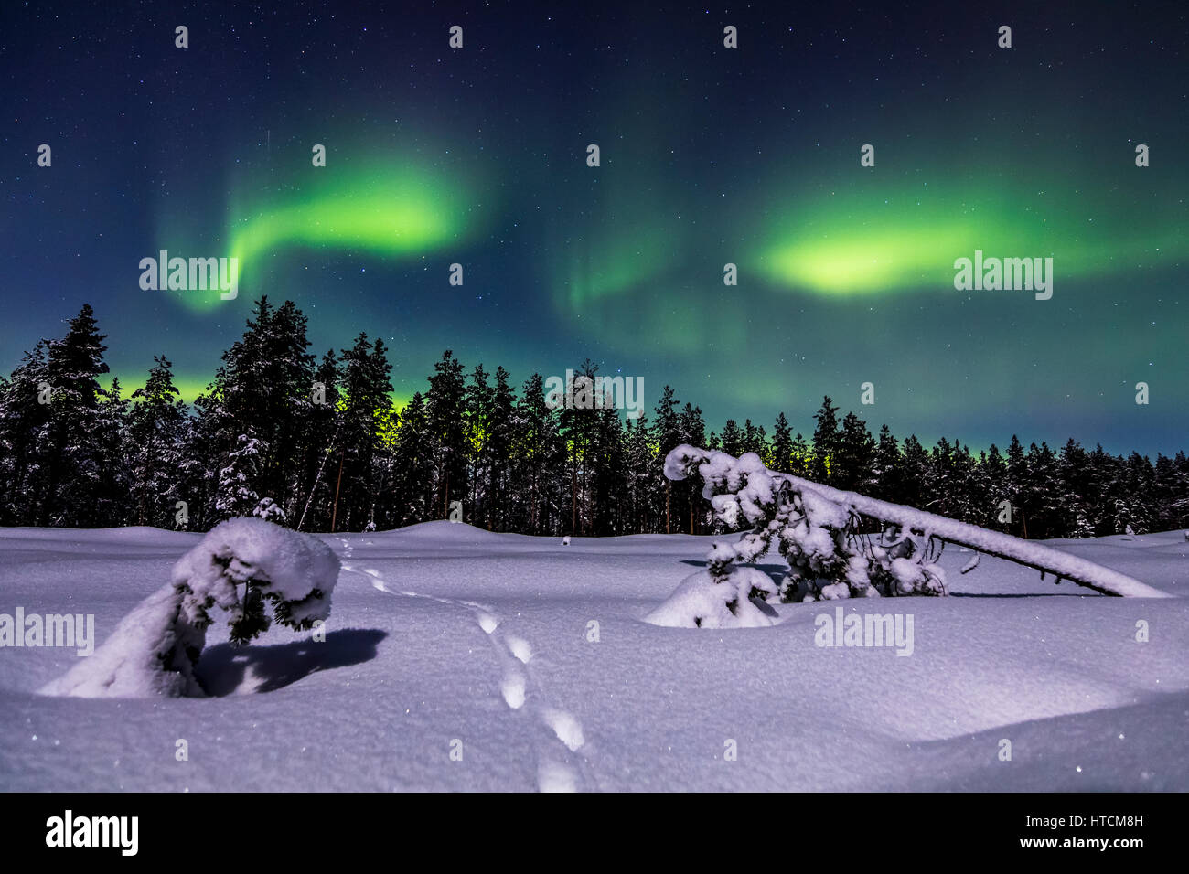 Fox tracks under the aurora Stock Photo