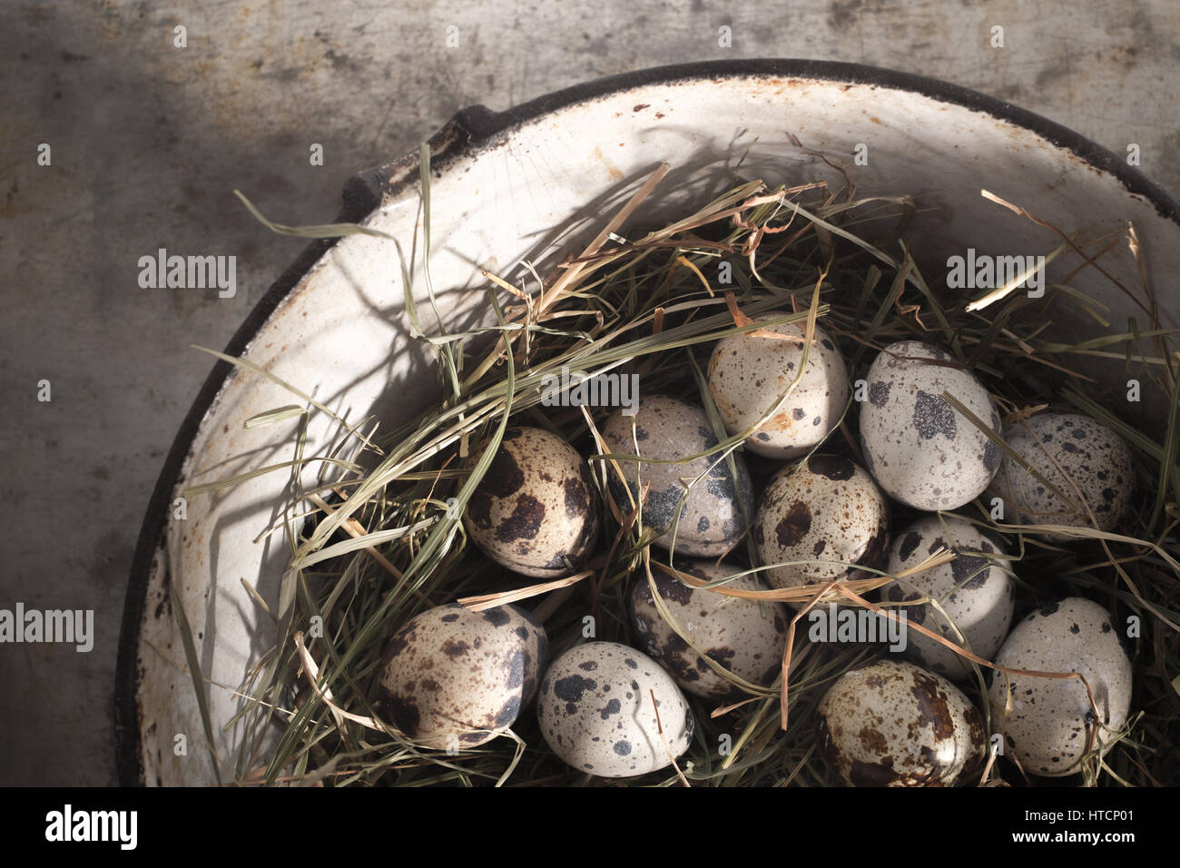 Quail eggs laid on hay - from above - Stock Image
