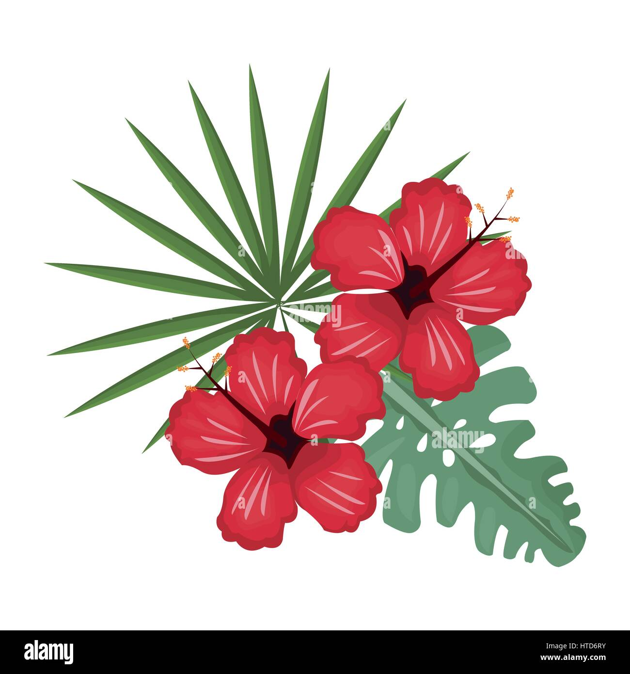 Hibiscus Flowers Stock Vector Images Alamy