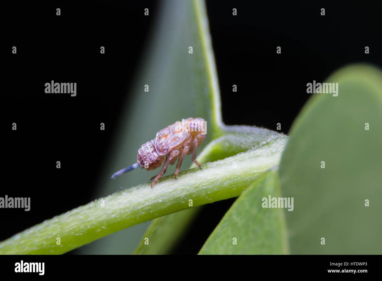 Insect Praying Mantis Walking Stick Green High Resolution Stock