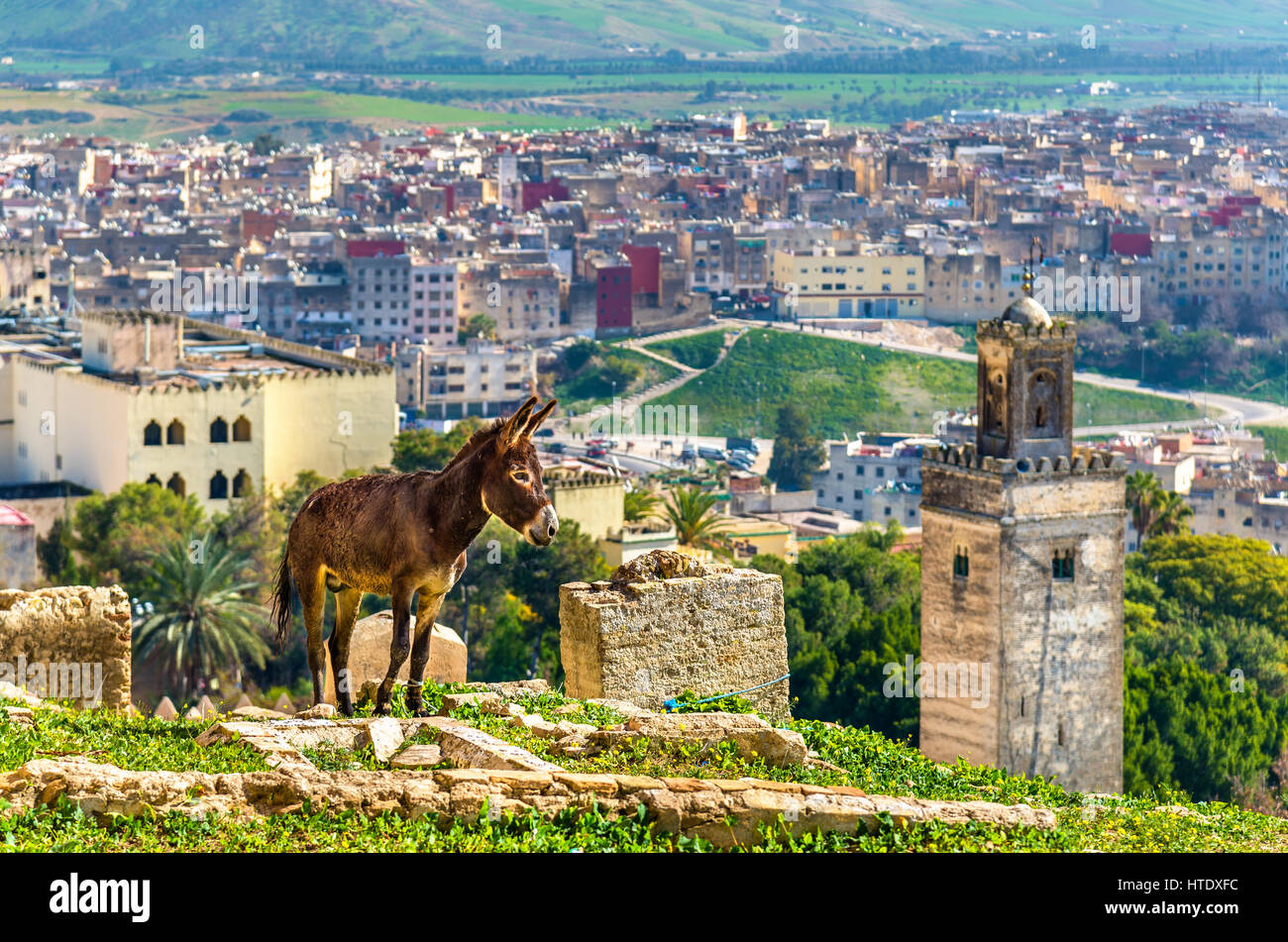 Donkey at the city walls of Fes - Morocco Stock Photo