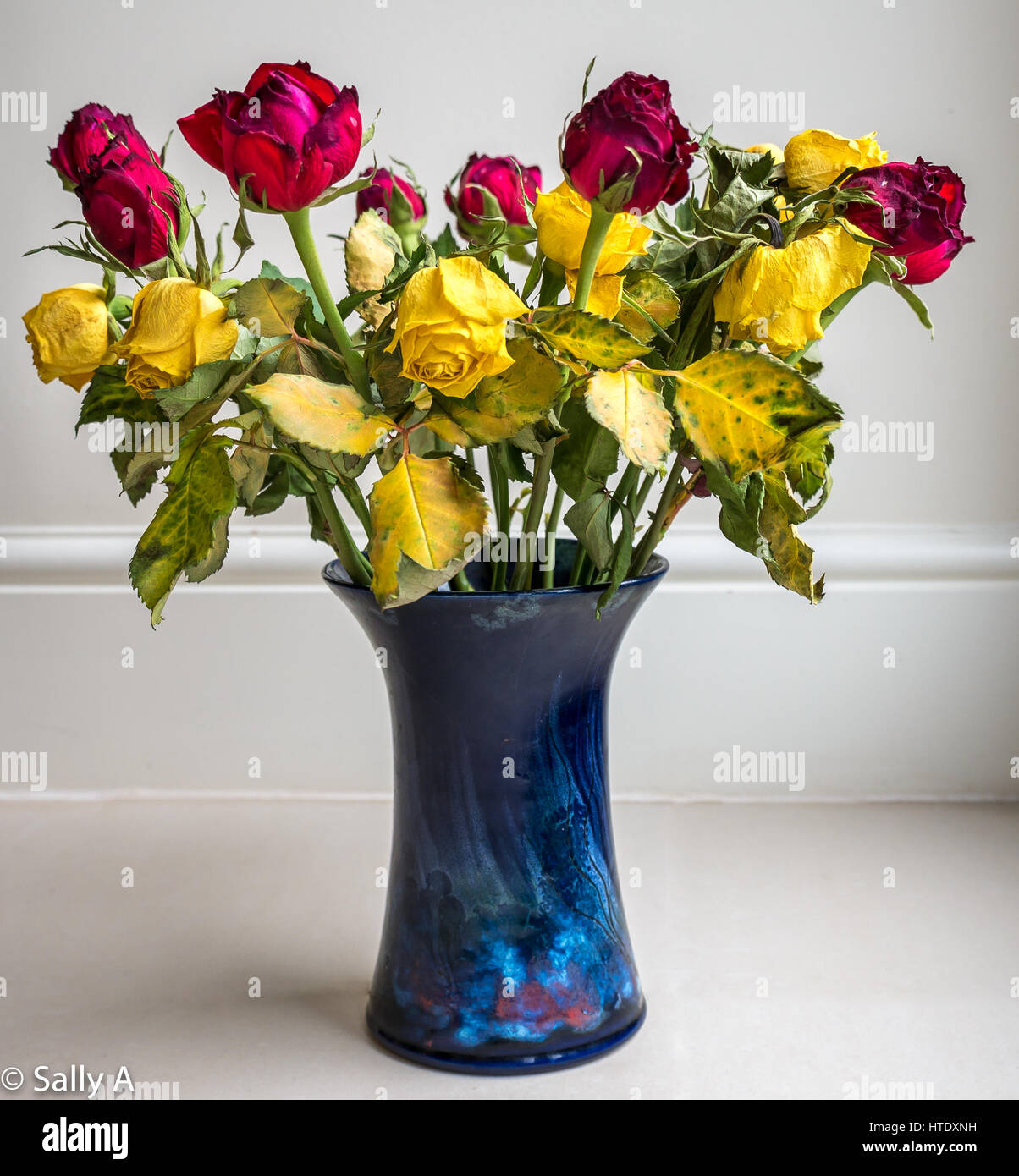 Faded Dying Dried Up Rose Flowers Arranged In Blue Ceramic Vase Stock Photo Alamy