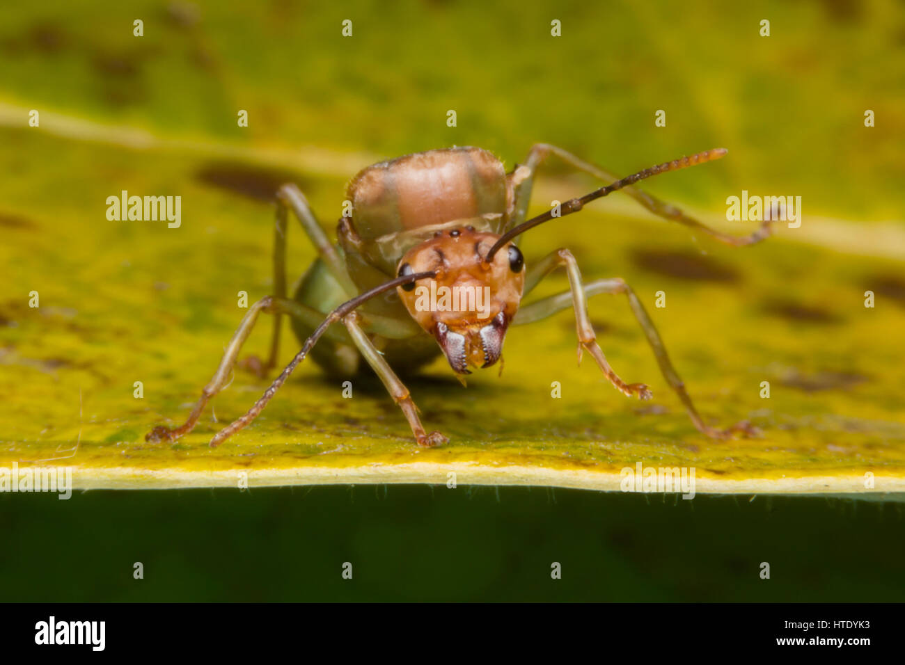 ant queen game download free