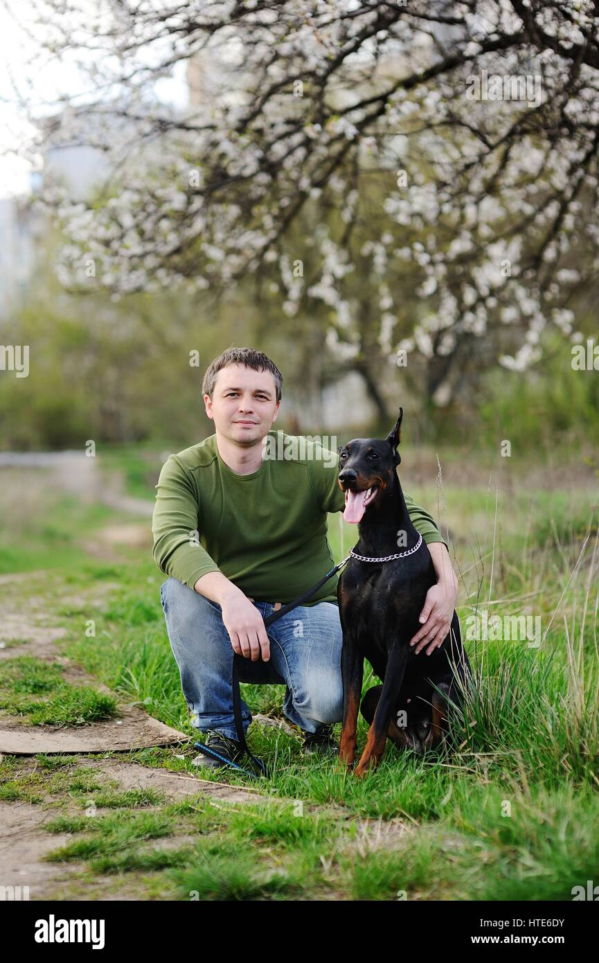 Young man sits on the grass with dobermann dog on a background of spring blooming trees - Stock Image