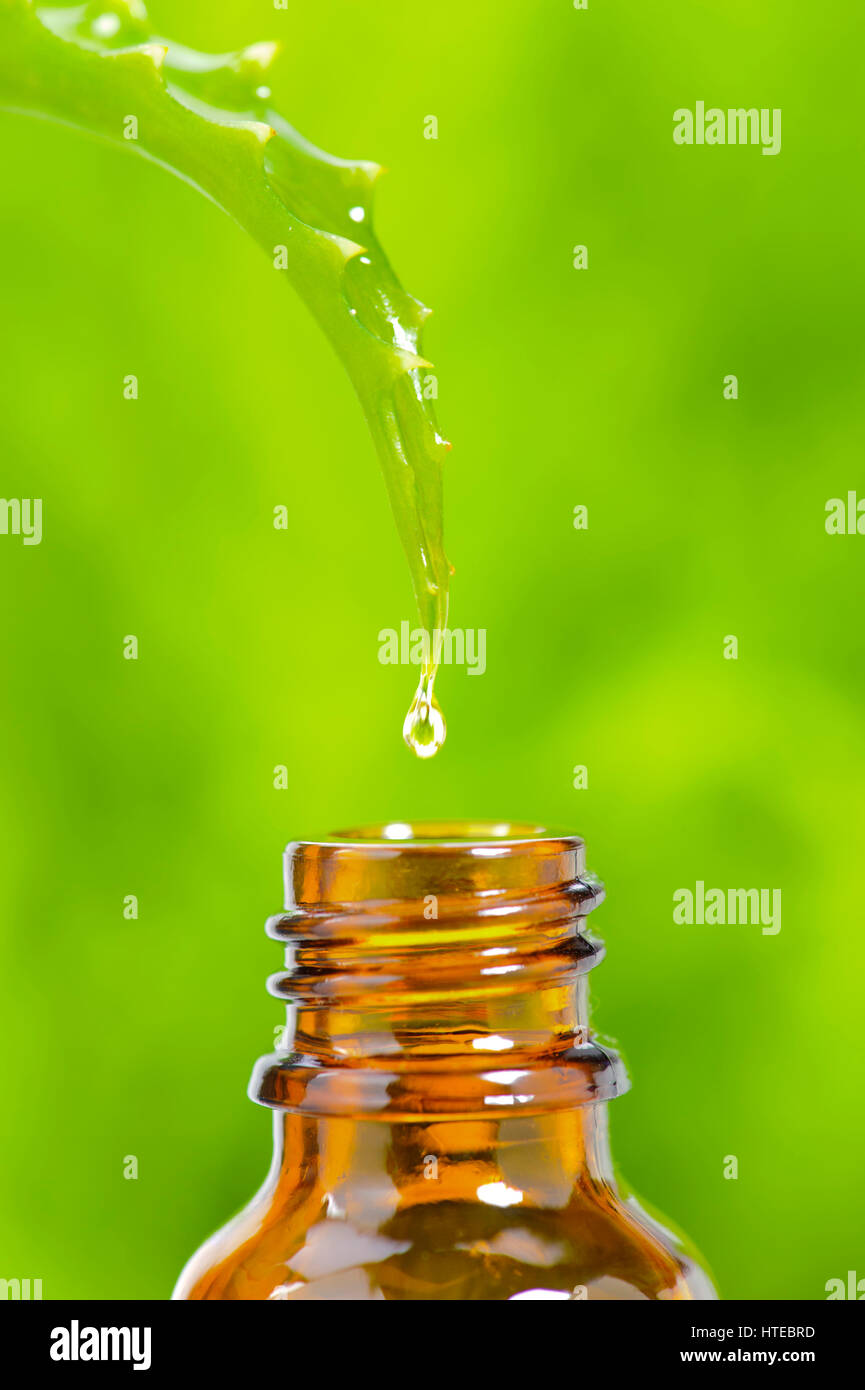 alternative medicine with essence from aloe vera cactus for healthcare and homeopathic therapy - Stock Image