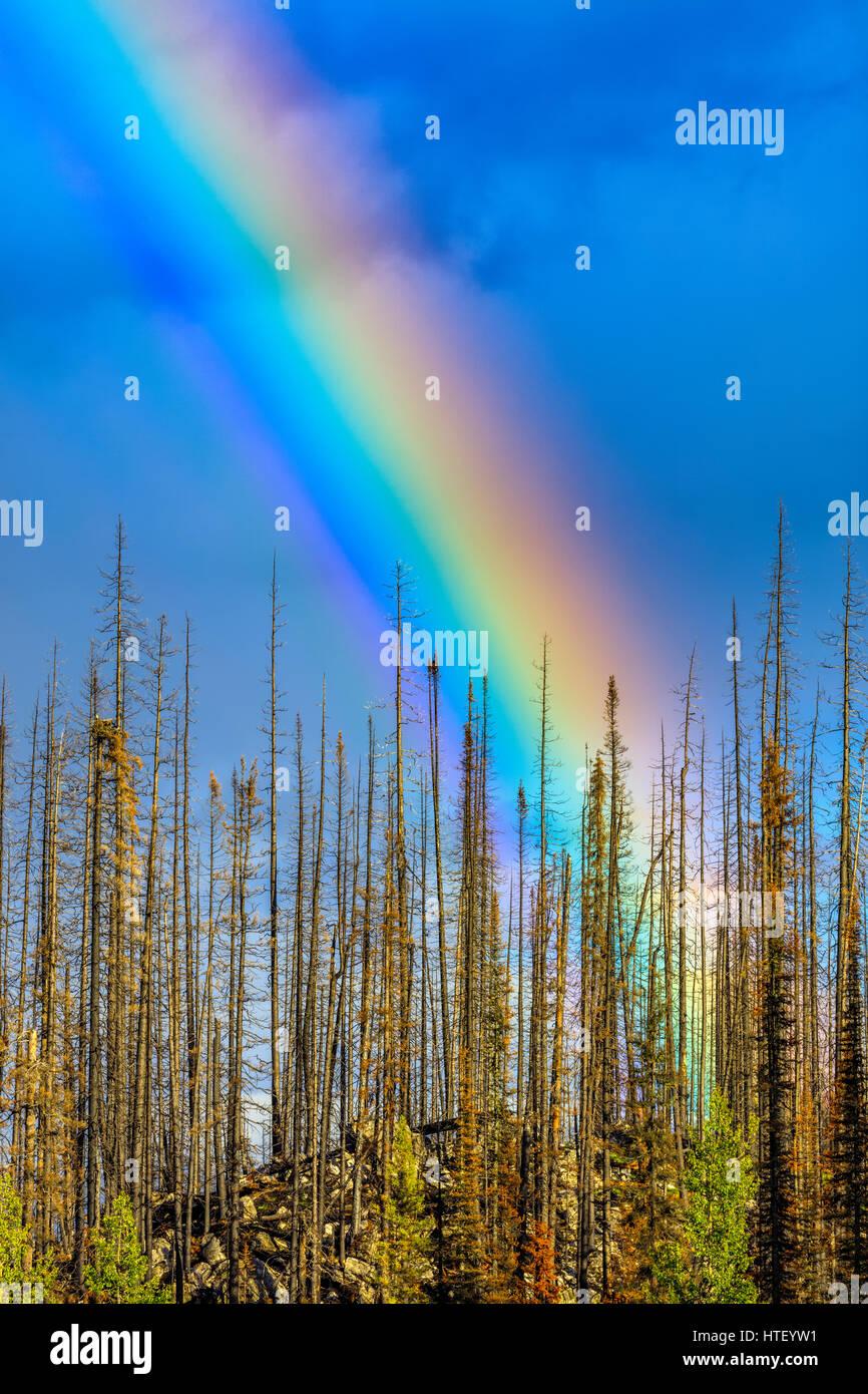 Rainbow in Medicine Lake area, Jasper National Park - Stock Image