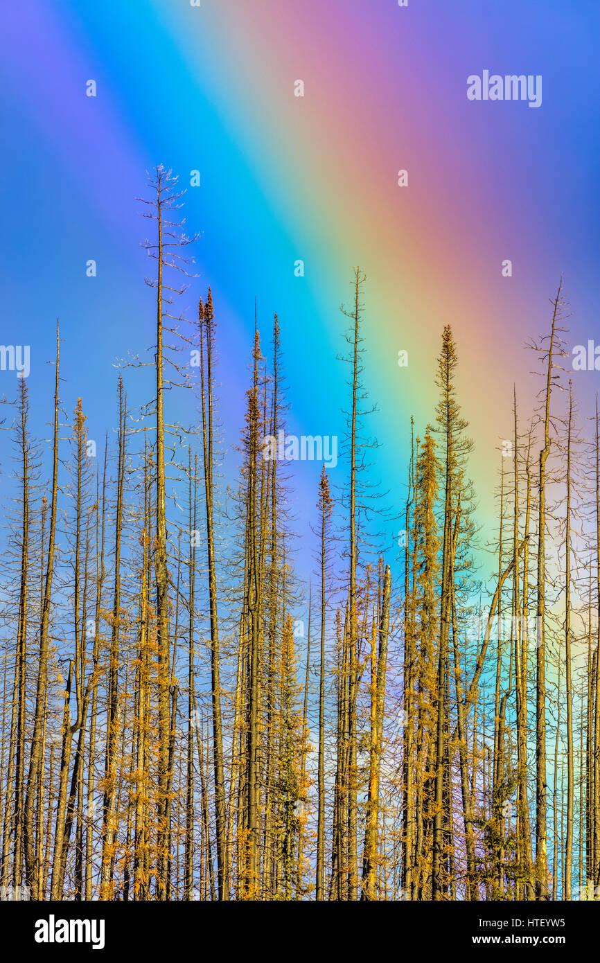 Rainbow in Medicine Lake area, Jasper National Park Stock Photo