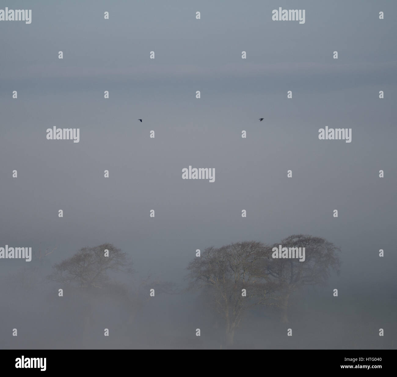 Rolling countryside of trees fields and cows with layers of mist and fog on a misty foggy frosty winter morning - Stock Image