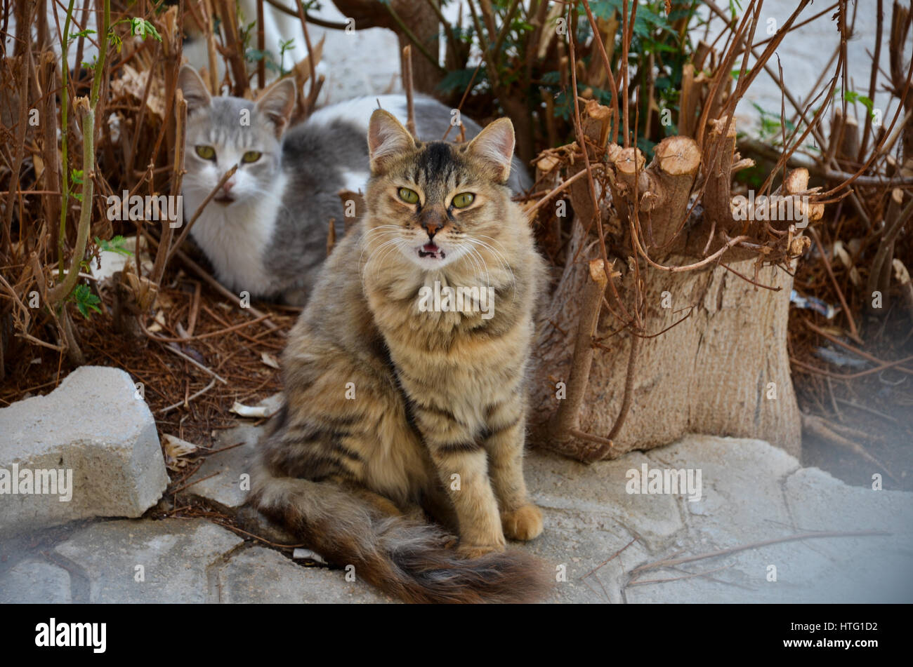 Fluffy cats - Stock Image