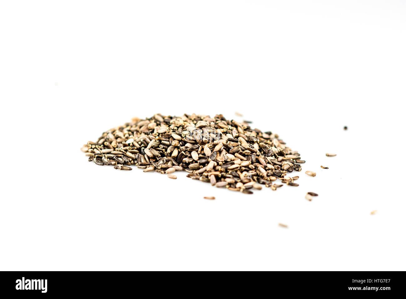 Milk Thistle Seed - Stock Image