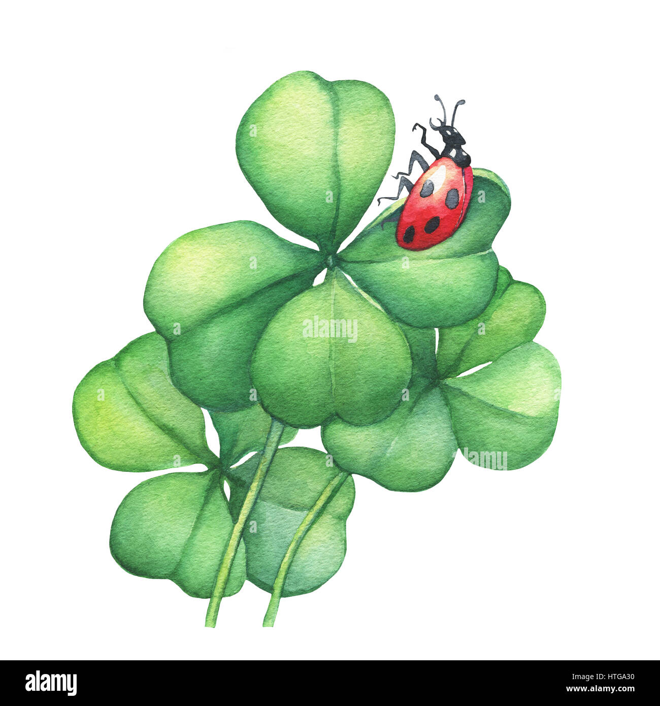 Ladybug sitting on a green four leaf clover. Hand drawn watercolor painting on white background. - Stock Image