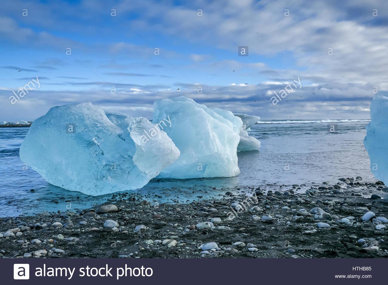 Blue icebergs on black lava sand beach at Jokulsarlon iceberg lagoon, Iceland - Stock Image