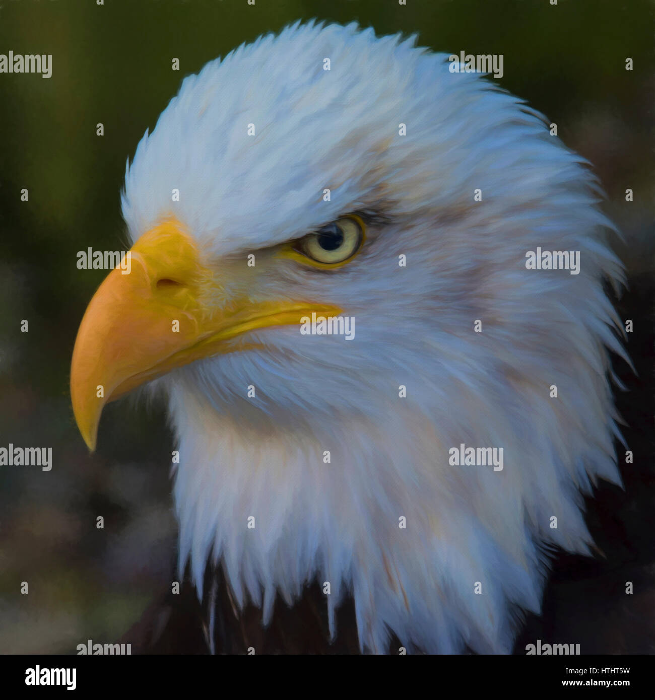 American Bald Eagle - Stock Image