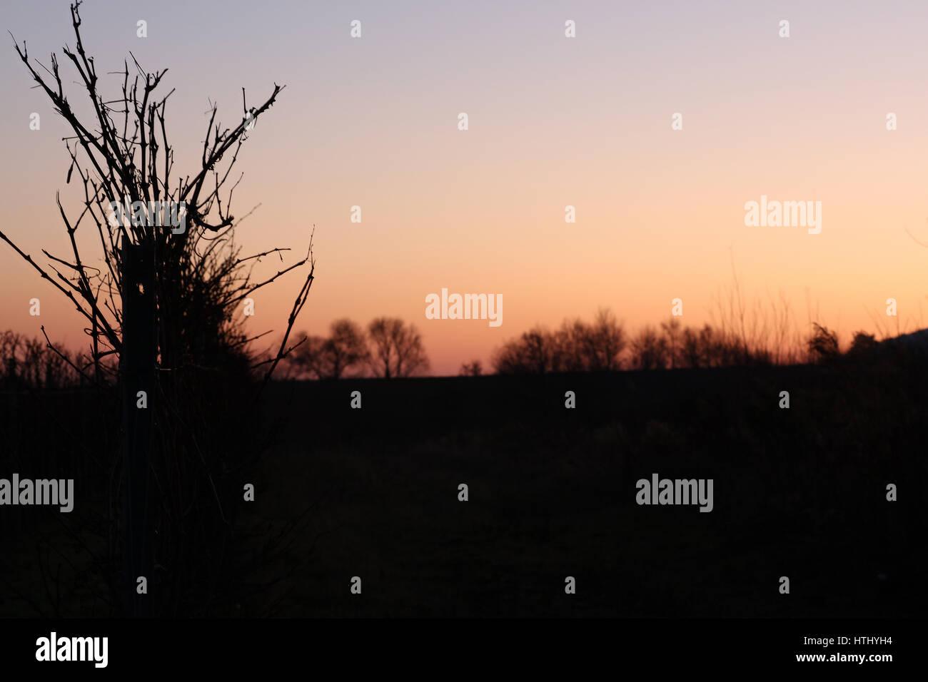 Weinberg im Sonnenuntergang Stock Photo