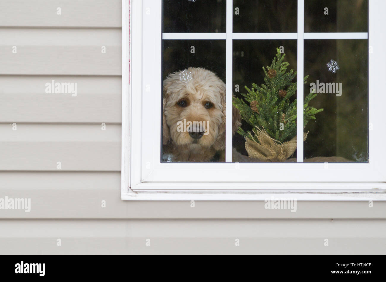How much is that doggy in the window? - Stock Image
