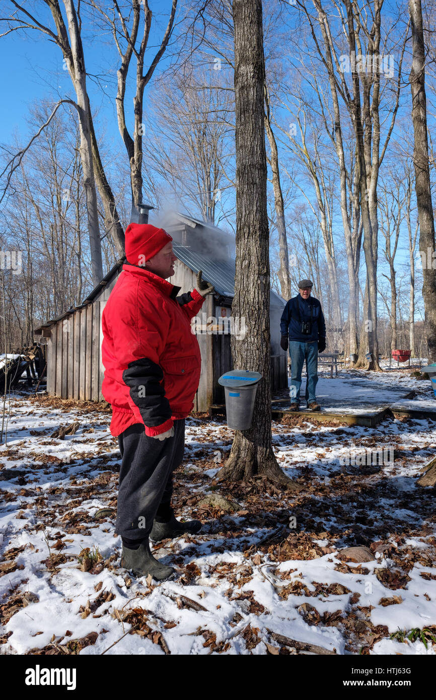 A vounteer explains how maple syrup is extracted in front of a maple tree in the Kinsmen Fanshawe Sugar Bush in - Stock Image