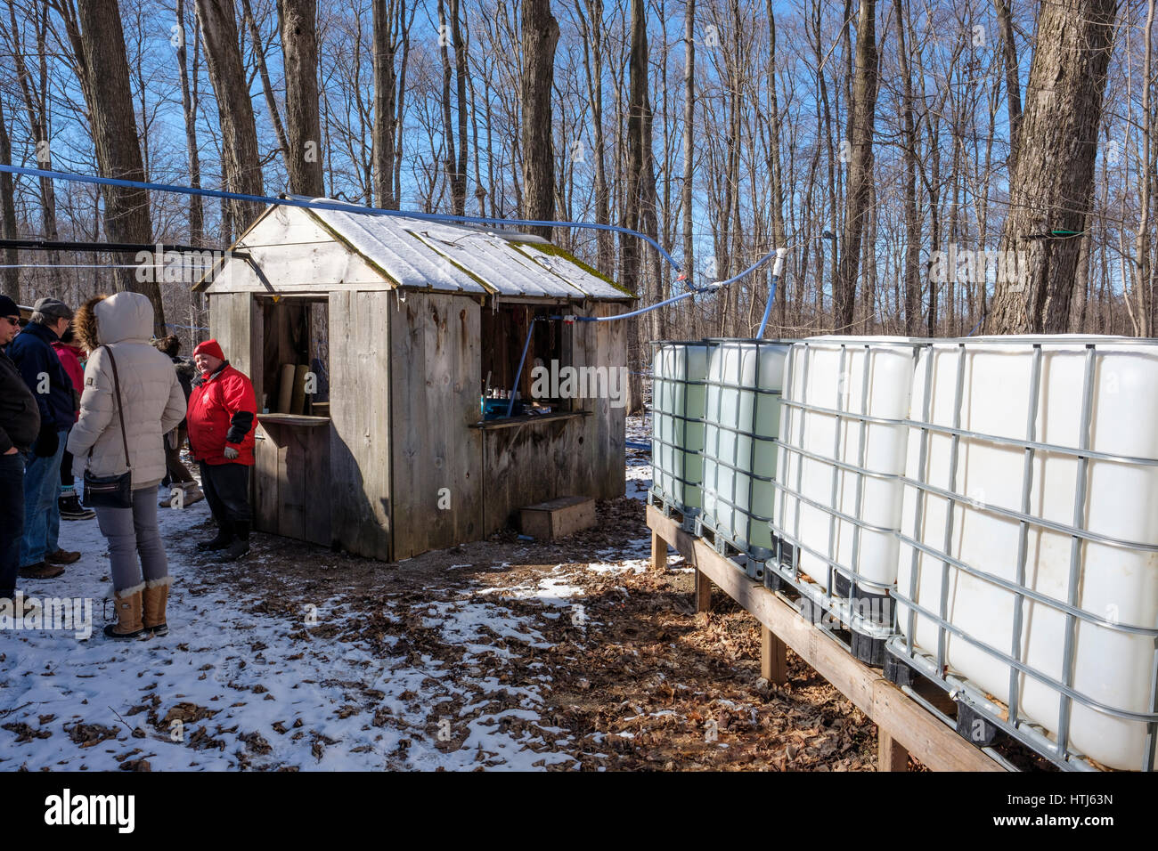 Storage containers, tanks, used to store raw sap before being boiled to produce maple syrup in the Kinsmen Fanshawe - Stock Image