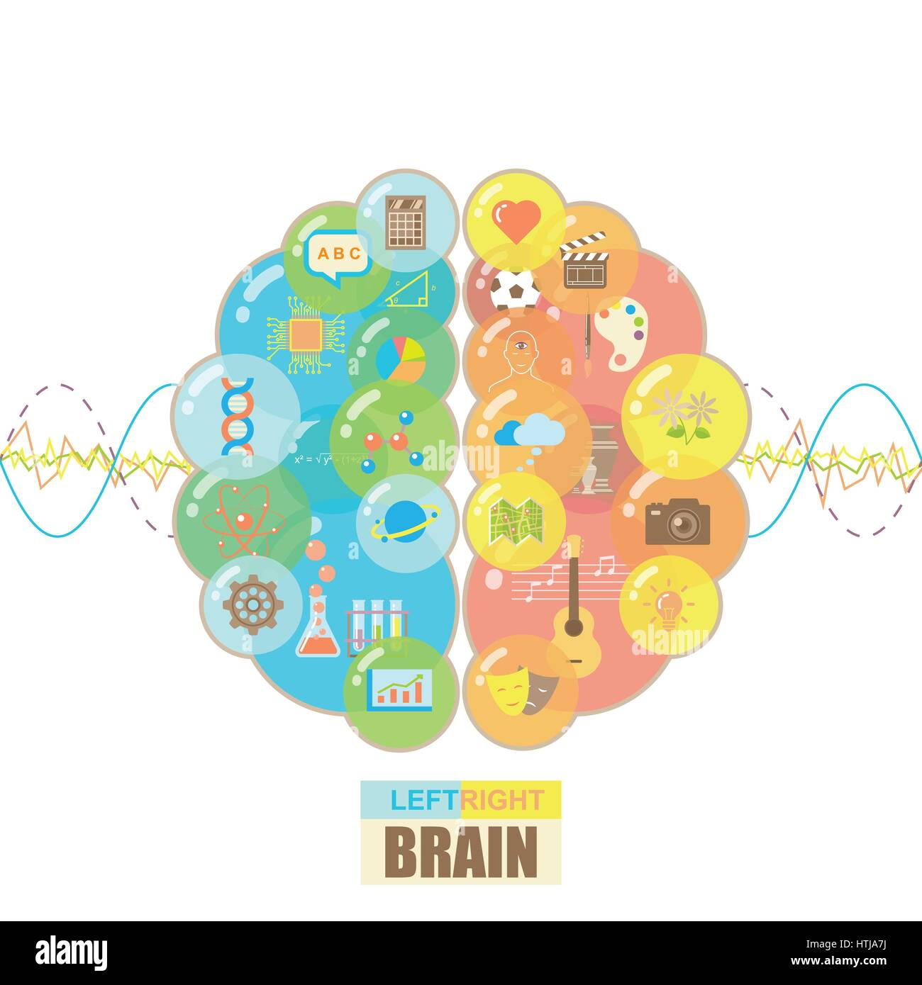 Functions of left and right brain hemispheres in groups of colorful bubbles with brain waves concept on white background - Stock Image