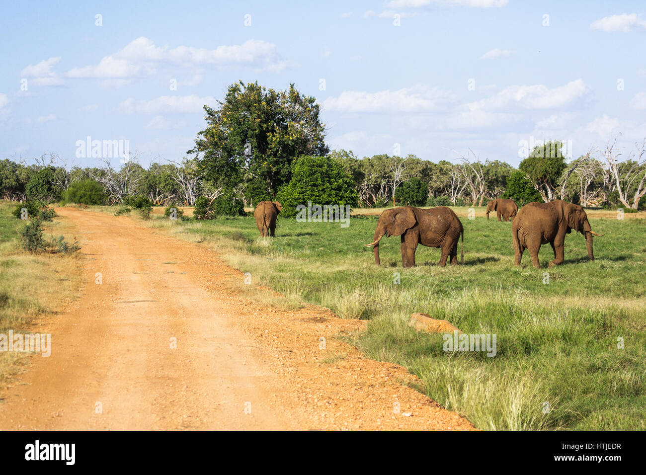 Elephants in Tsavo East National Park. Kenya. - Stock Image