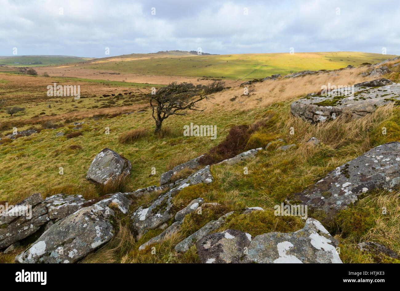 Twelve Mens Moor part of Bodmin Moor - Stock Image