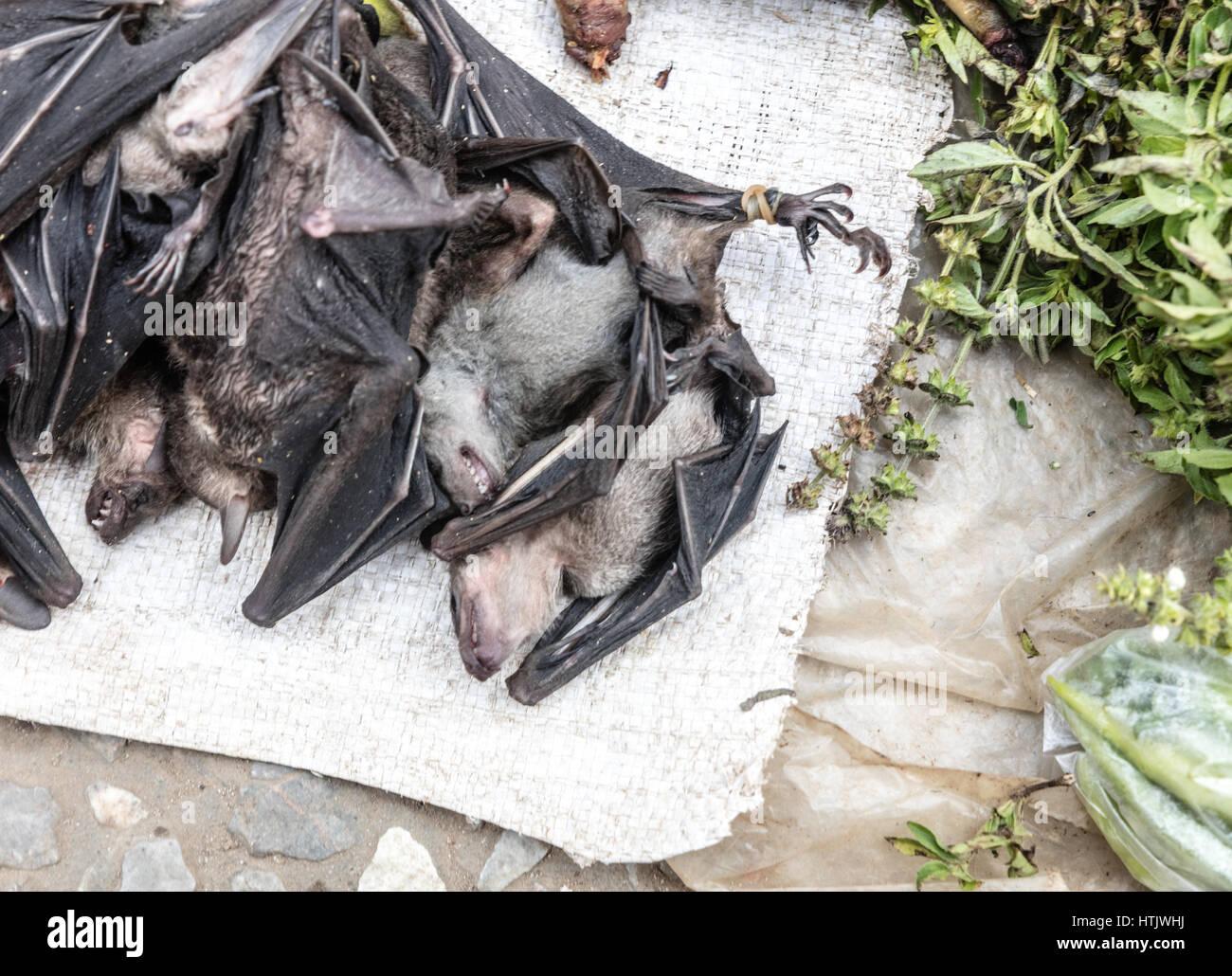 Bats sold at market in Luang Prabang, Laos Stock Photo: 135639550 ...