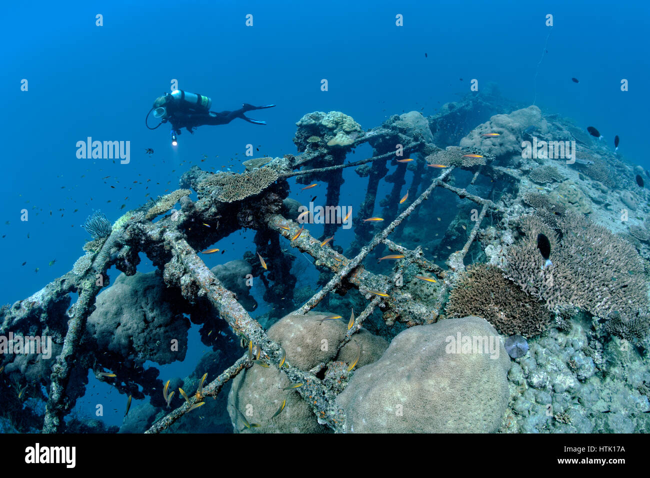 Diver near British Loyalty shipwreck, overgrown with corals, Addu Atoll also Senu Atoll, Indian Ocean, Maldives - Stock Image