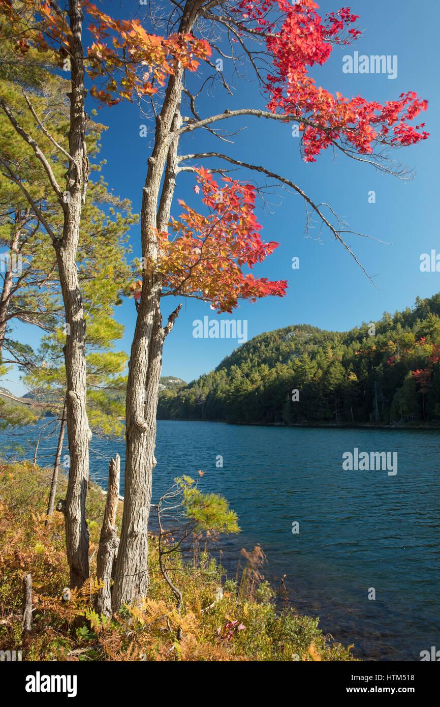 Autumn colours at Grace Lake, Killarney Provincial Park, Ontario, Canada - Stock Image