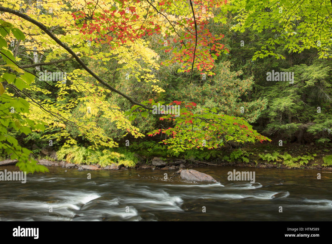 Autumn colours along the Oxtongue River at Ragged Falls Provincial Park, Ontario, Canada - Stock Image