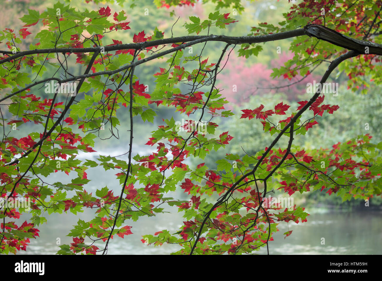 Autumn colours, Oxtongue Rapids, Muskoka, Ontario, Canada - Stock Image