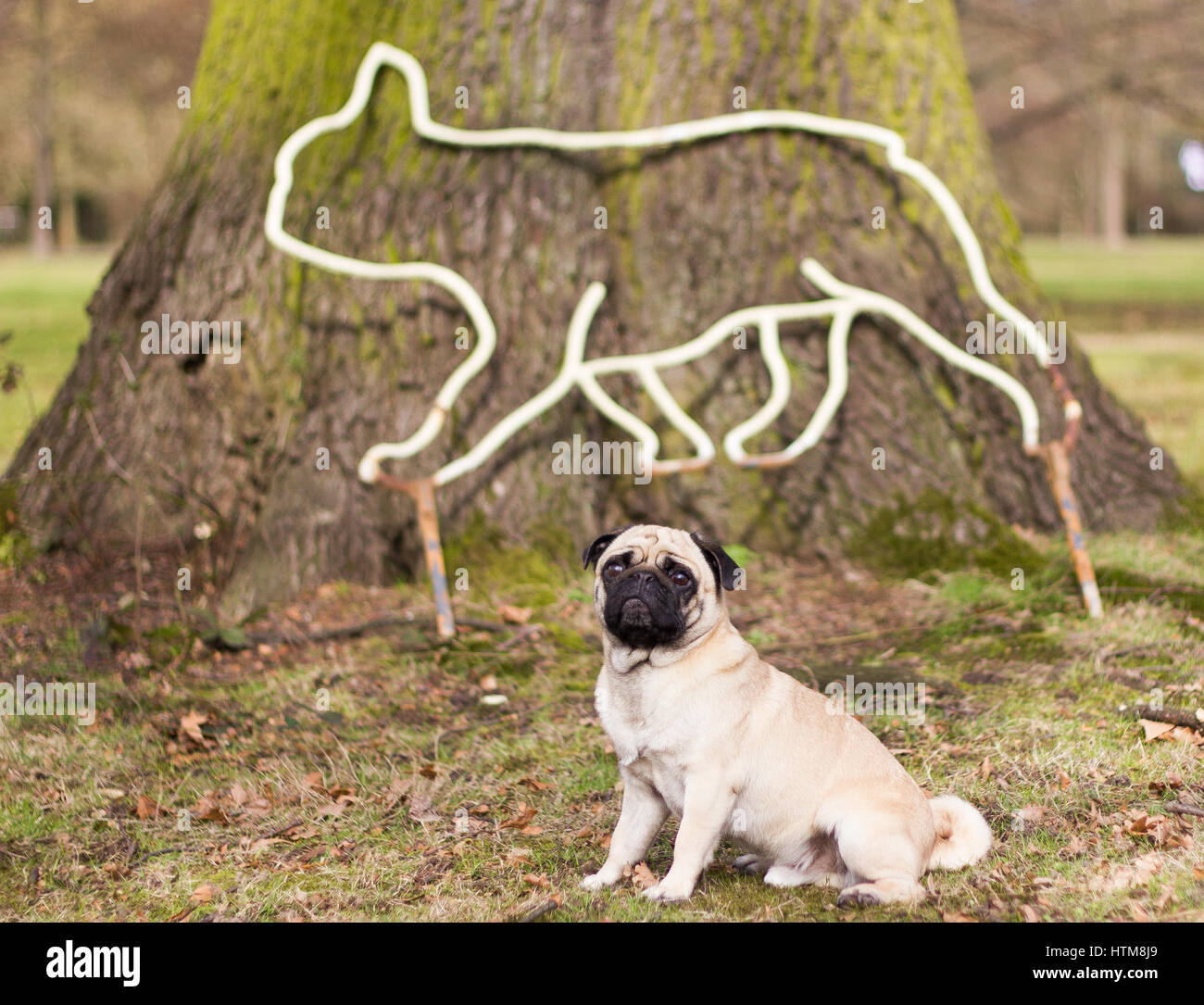 'Mans best friend' strikes a pose alongside a metal sculpture in a nature setting - Stock Image