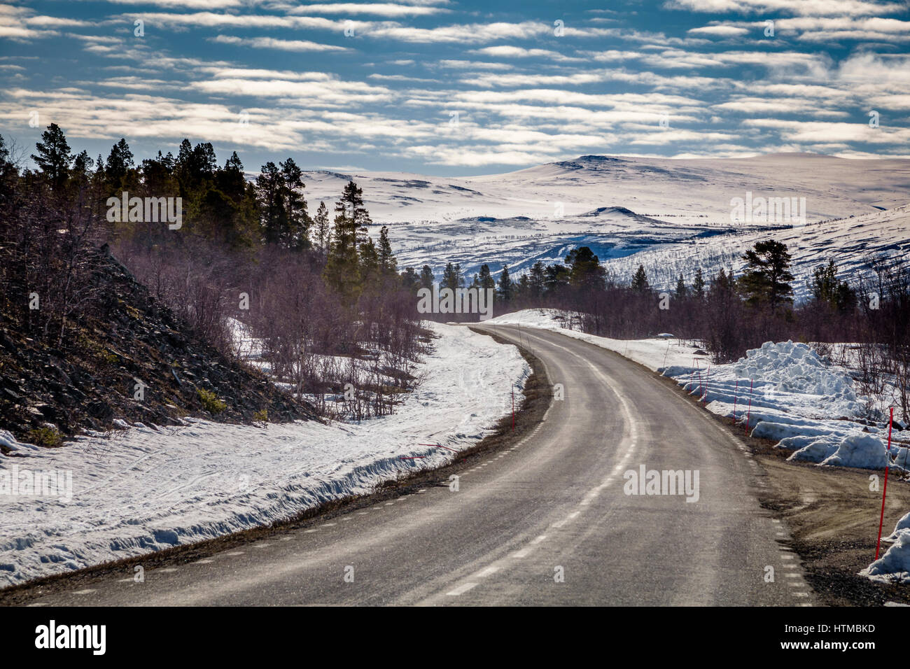 Empty road, Forest in Laponia Area, Stora Sjofallet National Park, Lapland, Sweden.  World Heritage Area. - Stock Image