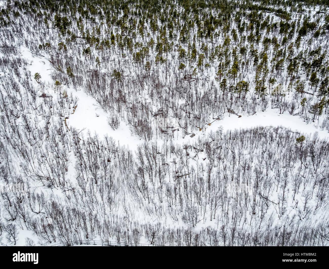 Forest in Laponia Area,  Stora Sjofallet National Park, Lapland, Sweden. Stock Photo