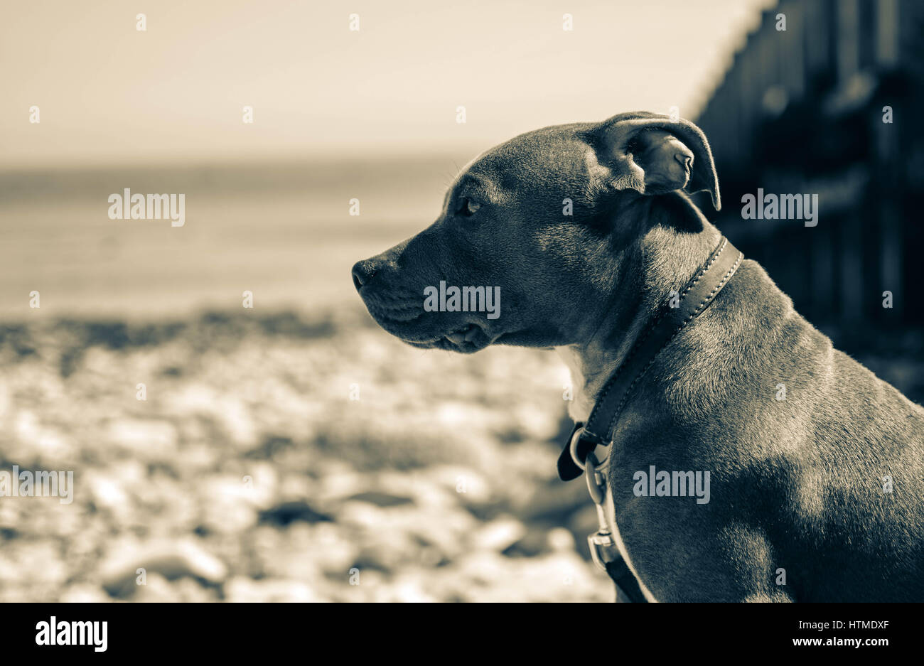 Max looking cool - Stock Image