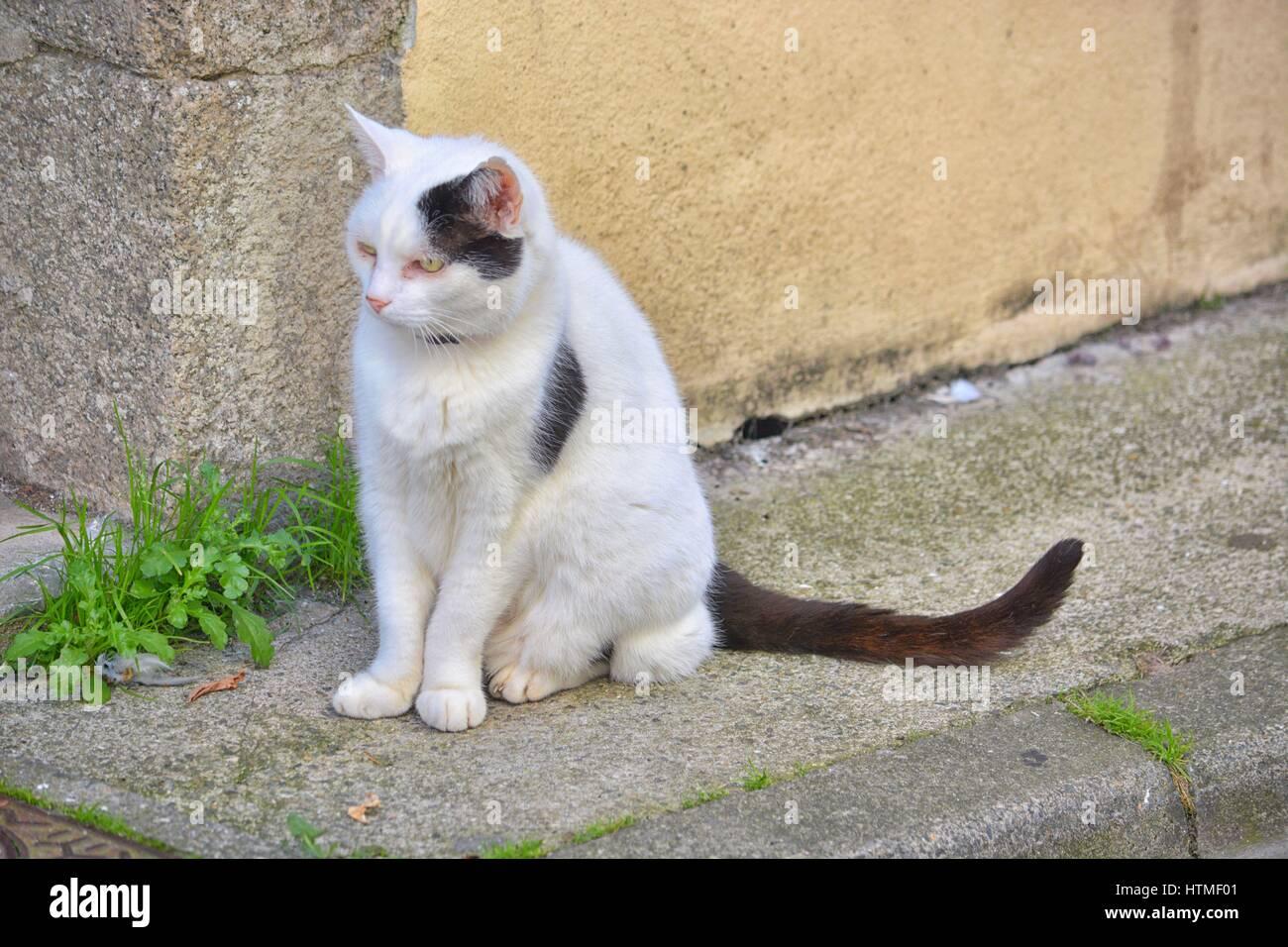 chat des villes. - Stock Image