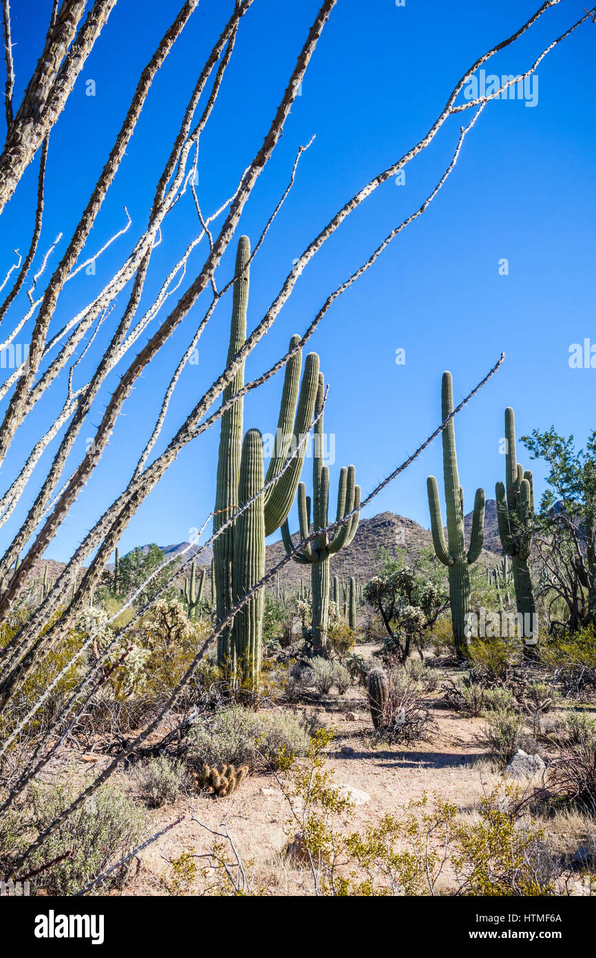 Desert Landscape, Saguaro National Park, Arizona. - Stock Image