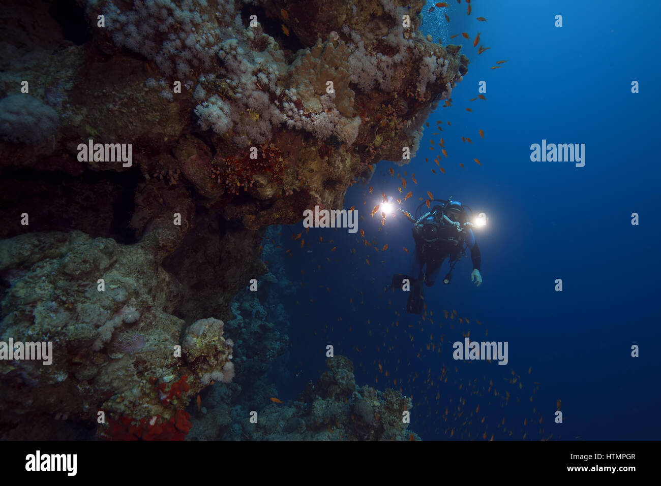 Underwater videooperator shoting scool of fish near coral reef, Red sea, Sharm El Sheikh, Sinai Peninsula, Egypt - Stock Image