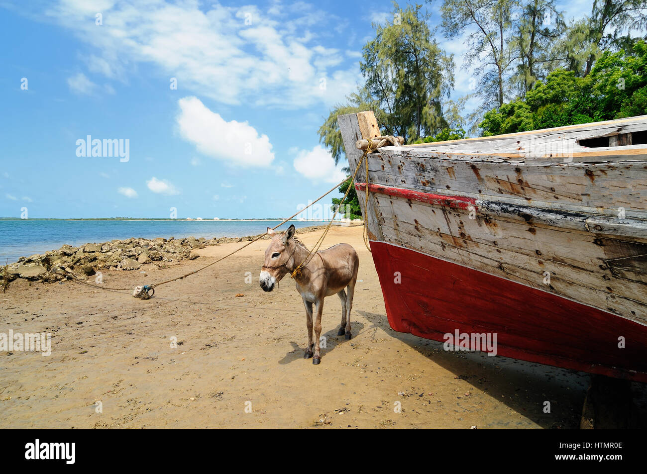 Donkey being used for a transportation of sand on the Lamu archipelago standing on the beach, Kenya Stock Photo